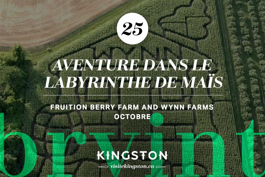 Aventure dans le labyrinthe de maïs